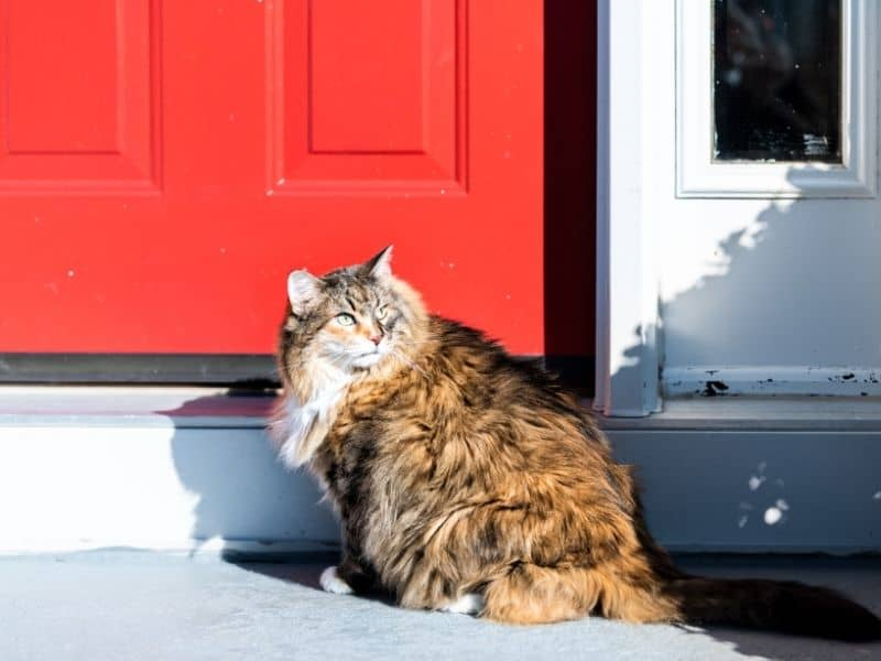 How to Keep Stray Cats off Your Porch: Try These Options ...
