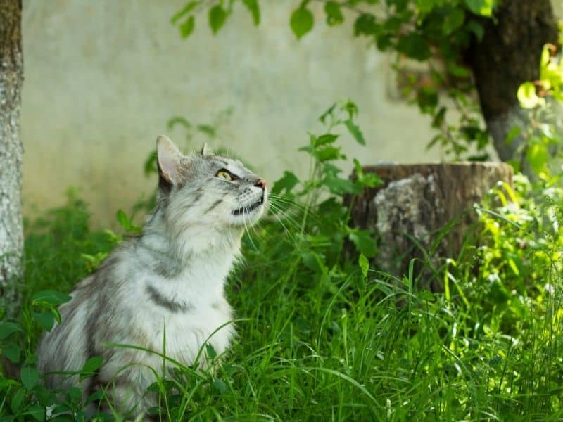 11 Ways To Safely Humanely Keep Cats From Pooping In Your Yard Sunshine Play